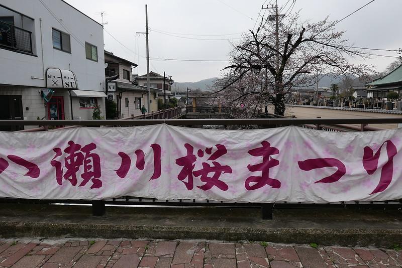 八瀬川桜まつり Yasegawa Cherry blossoms festival 02