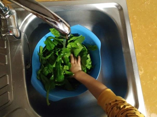 Lavamos las espinacas