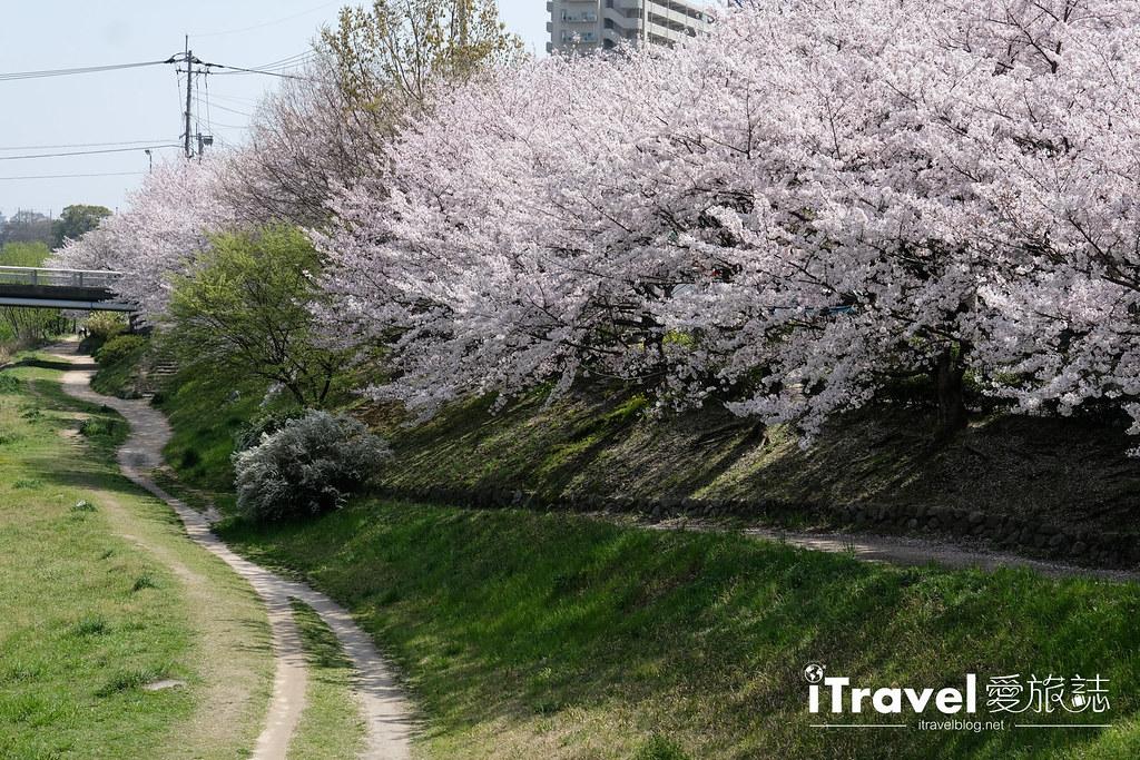 福岡賞櫻景點 美野島南公園 (27)
