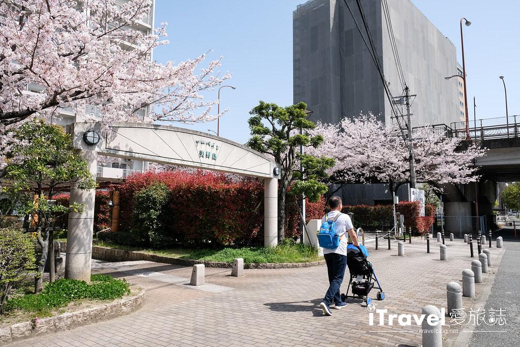 福岡賞櫻景點 美野島南公園 (4)