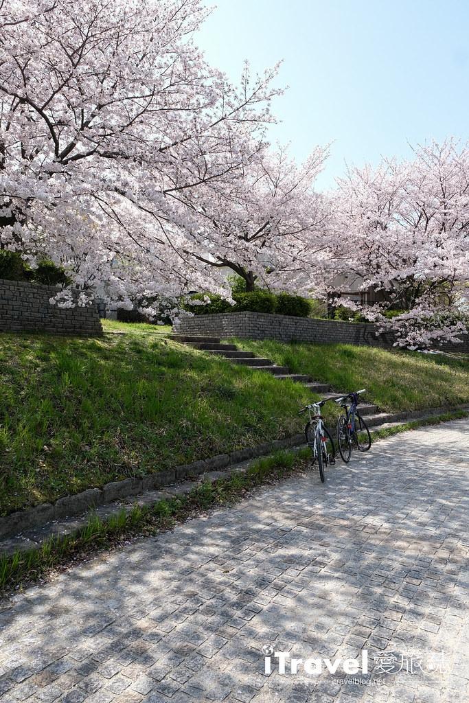 福岡賞櫻景點 美野島南公園 (35)