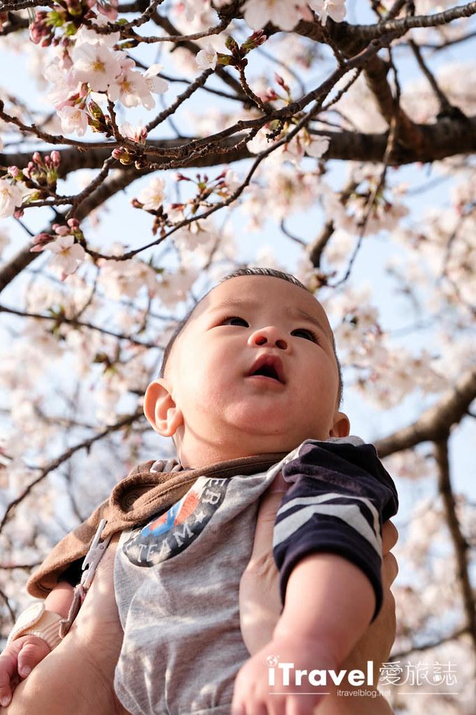 福岡賞櫻景點 博多清流公園 (42)