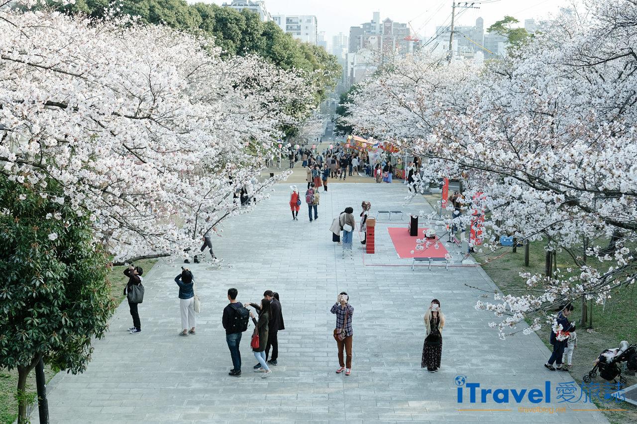 福岡賞櫻景點 西公園Nishi Park (1)