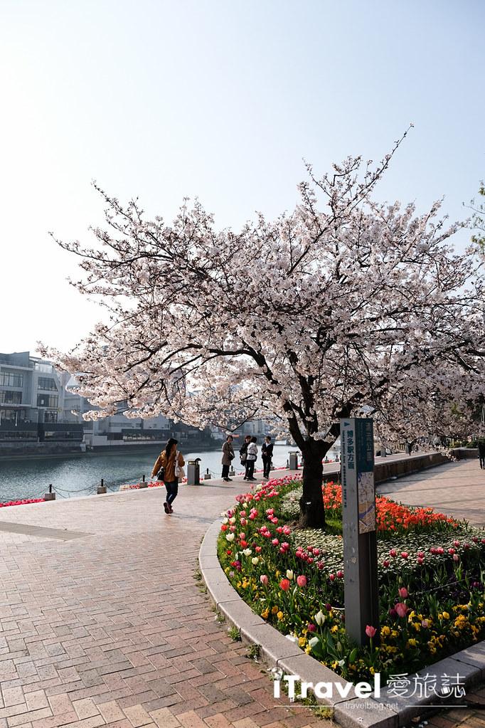福岡賞櫻景點 博多清流公園 (28)