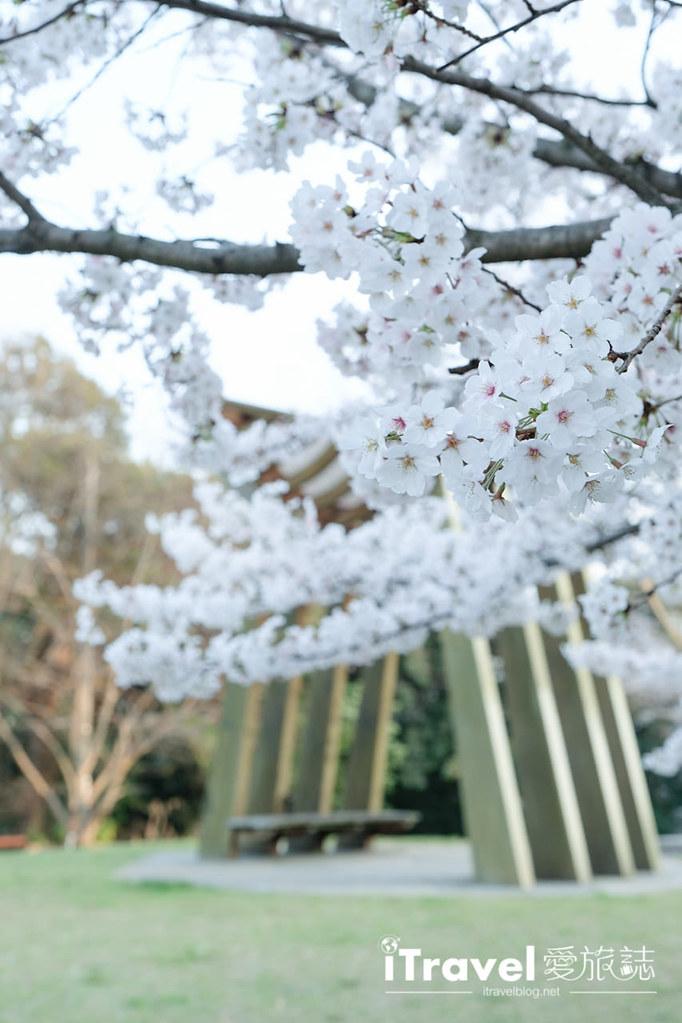 福岡賞櫻景點 西公園Nishi Park (60)