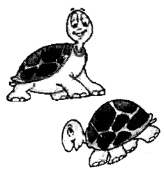 NCERT Solutions for Class 1 English Chapter 16 A Little Turtle 1
