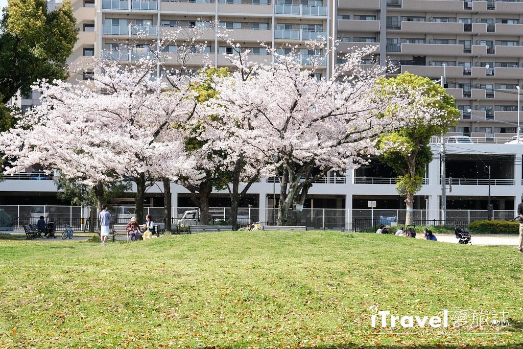 福岡賞櫻景點 美野島公園、東領公園 (9)