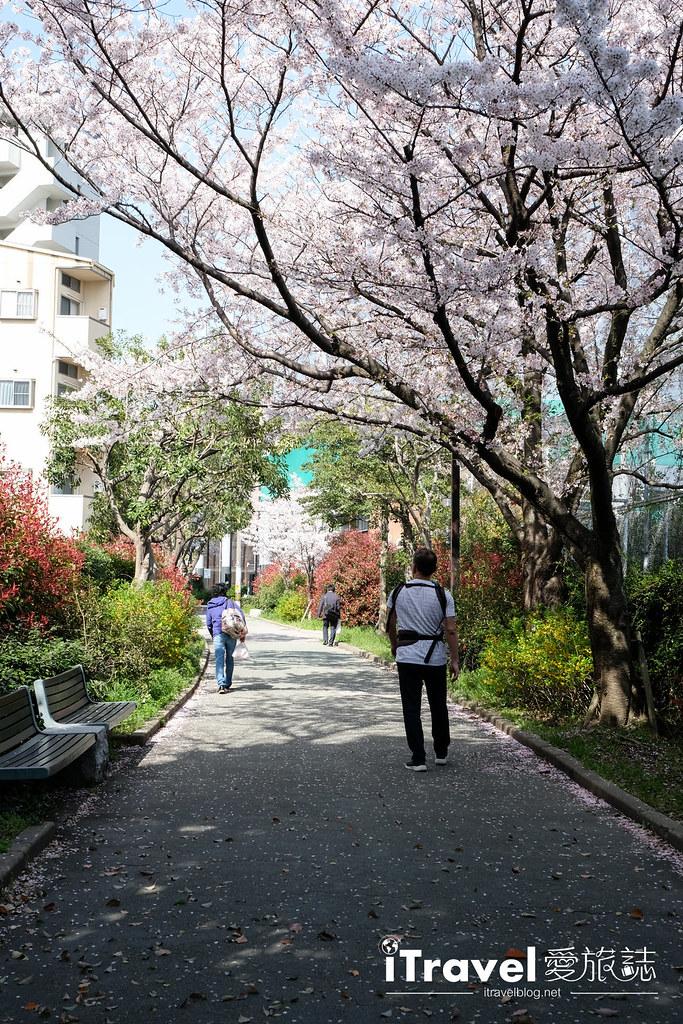 福岡賞櫻景點 美野島公園、東領公園 (7)