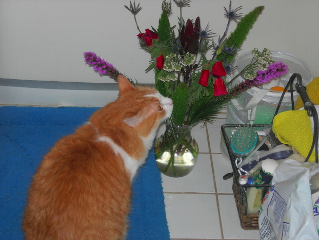 Flowers for me with Hodge