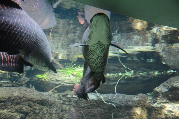 Den Bla Planet - Denmarks National Aquarium