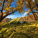 Autumn Turf