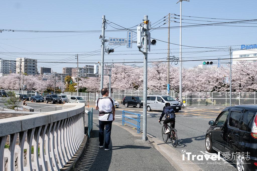 福岡賞櫻景點 美野島公園、東領公園 (2)