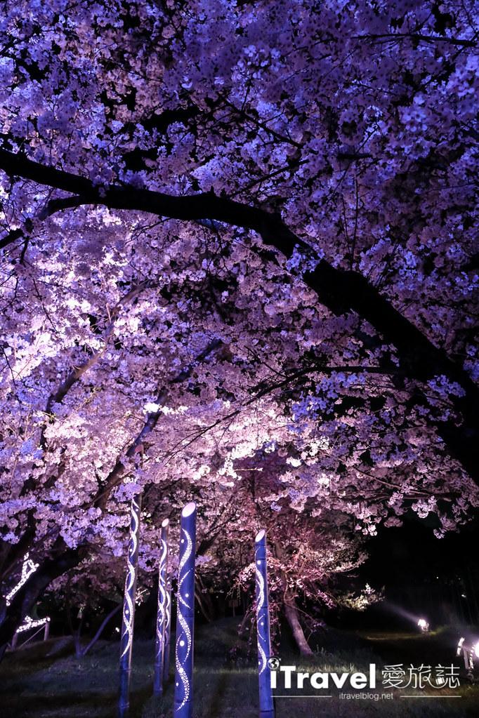 賞櫻景點 福岡城夜櫻 (76)