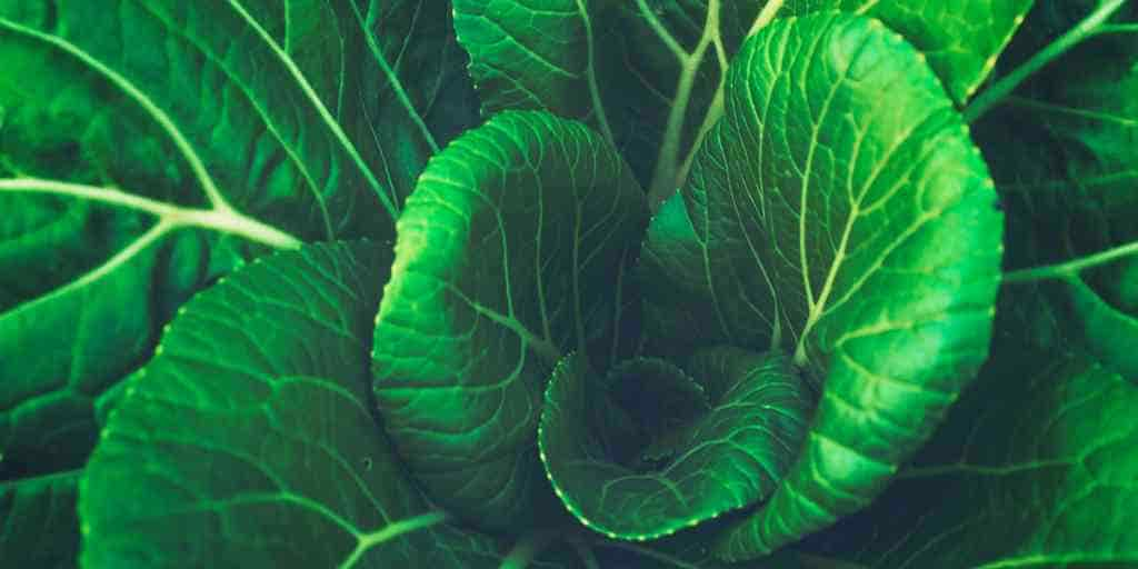 outil-génétique-transformer-plantes