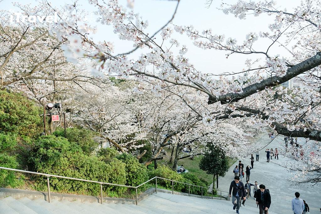 福岡賞櫻景點 西公園Nishi Park (37)