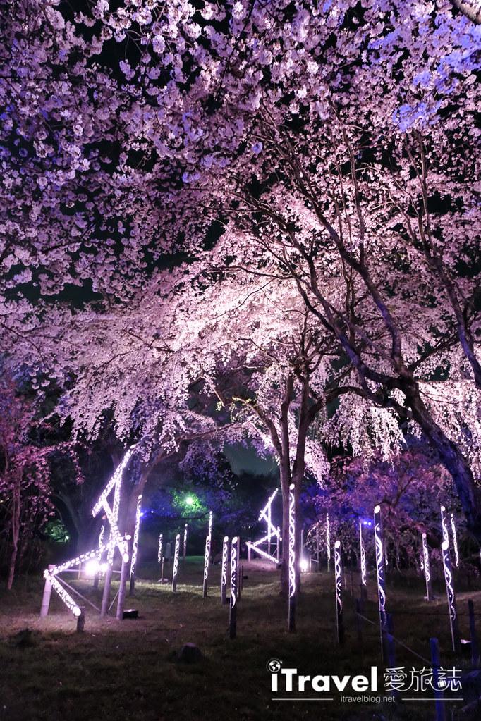 賞櫻景點 福岡城夜櫻 (65)