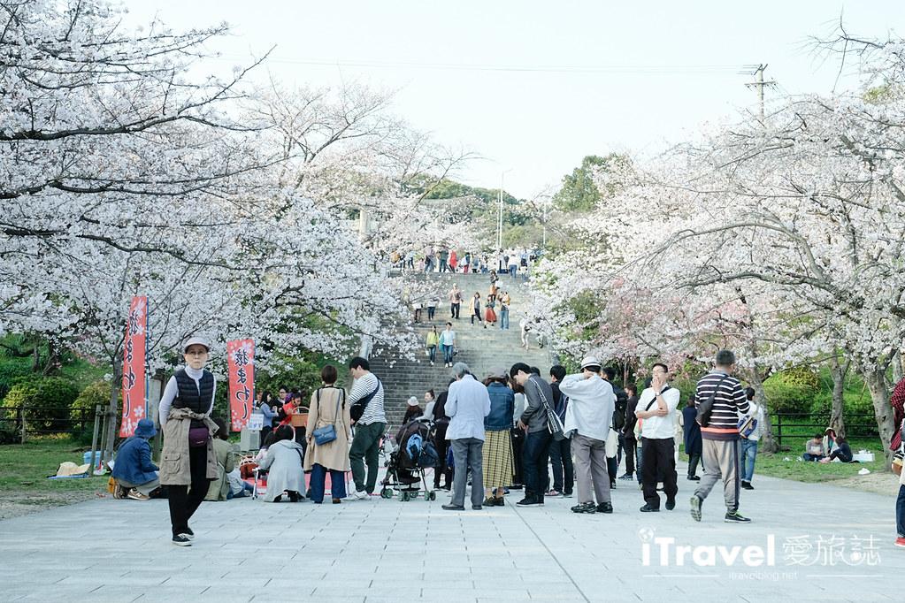 福岡賞櫻景點 西公園Nishi Park (29)