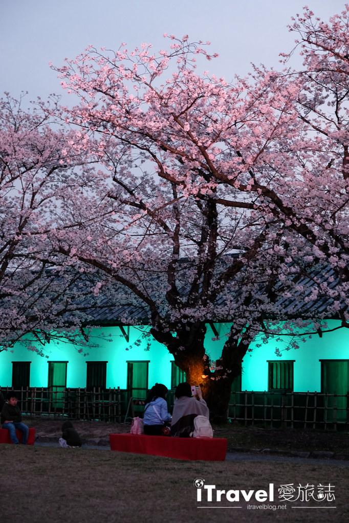 賞櫻景點 福岡城夜櫻 (43)