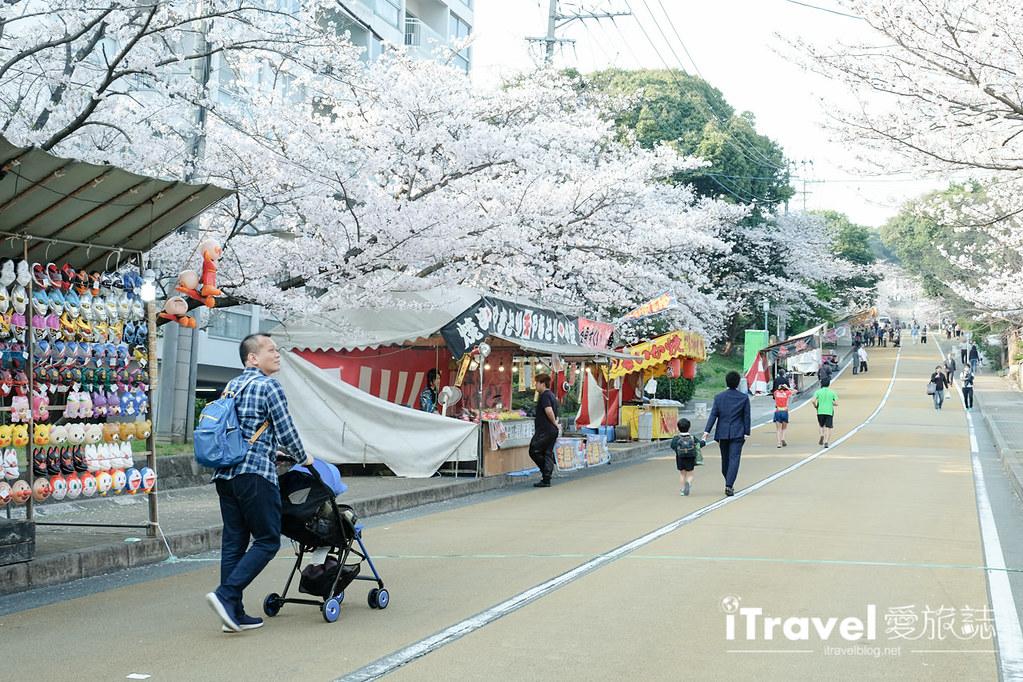 福岡賞櫻景點 西公園Nishi Park (3)
