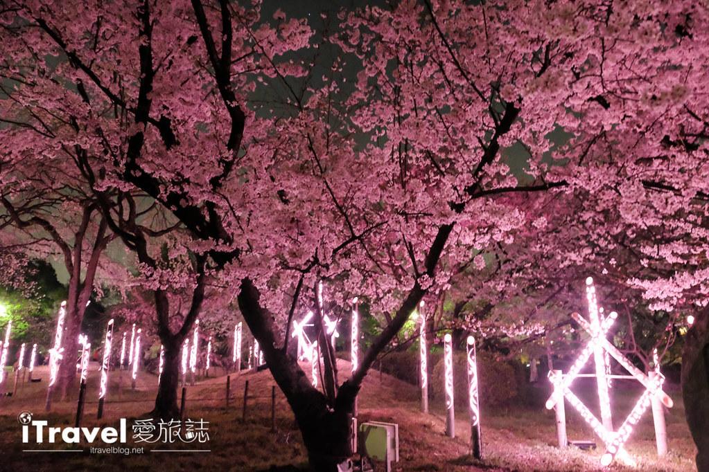 賞櫻景點 福岡城夜櫻 (64)