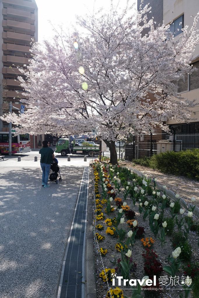 福岡賞櫻景點 美野島公園、東領公園 (33)