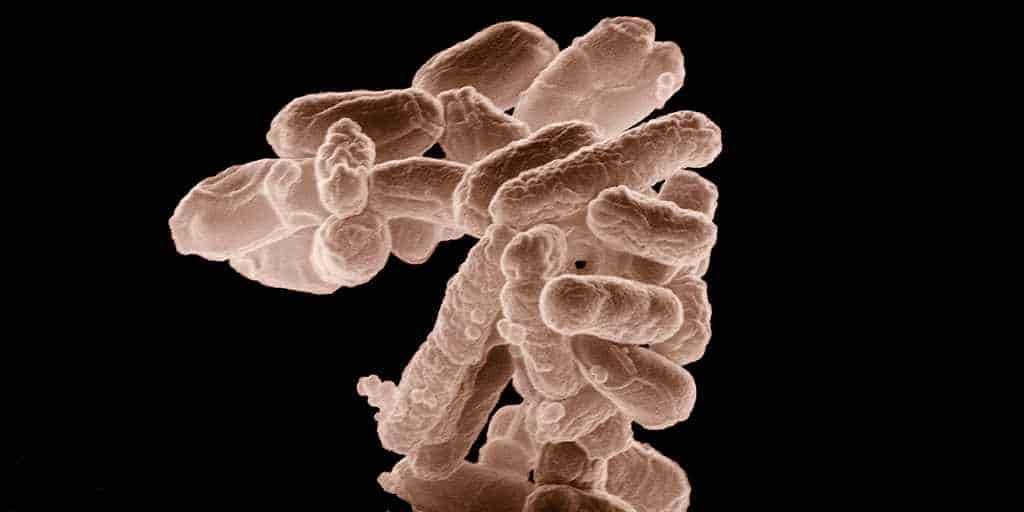 bactéries-résistantes-médicaments