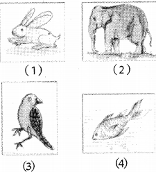 RBSE Solutions for Class 5 Environmental Studies Chapter 8 Q22