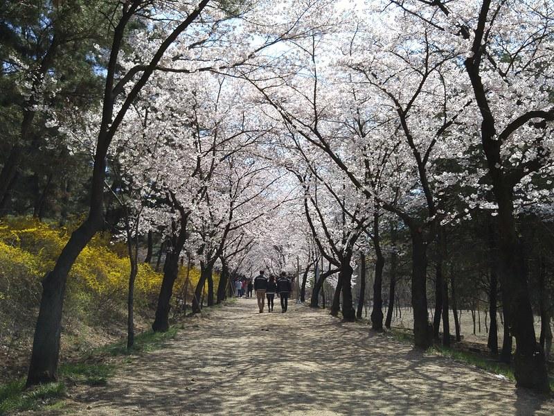 Love Road Yeungnam University