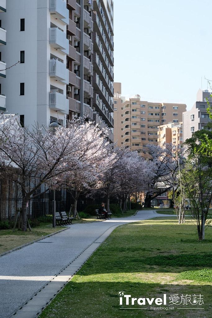 福岡賞櫻景點 美野島公園、東領公園 (23)