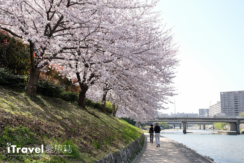 福岡賞櫻景點 美野島南公園 (53)