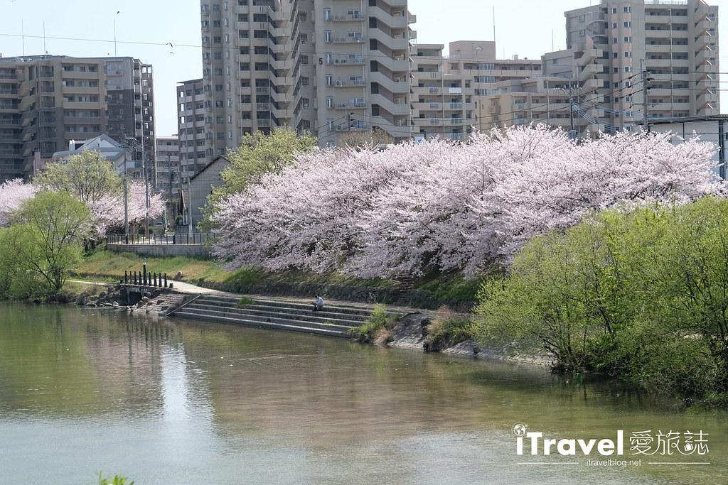 福岡賞櫻景點 美野島南公園 (12)
