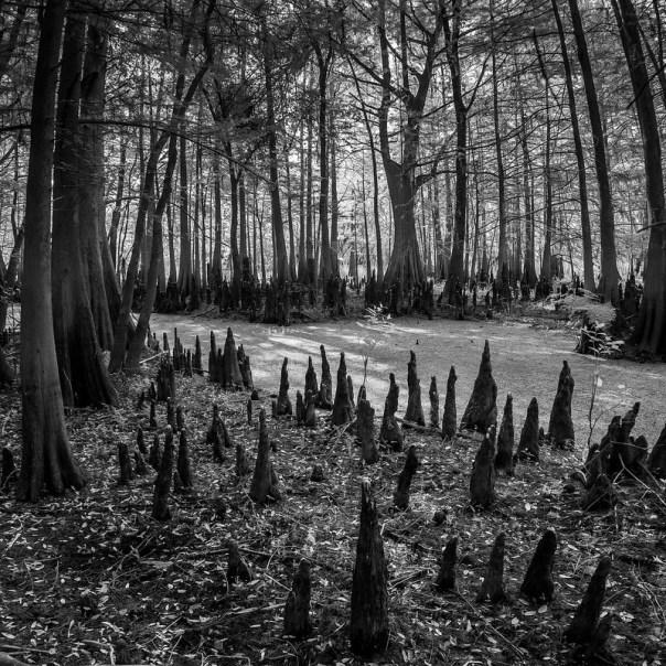 Black Bear Wilderness Area 4: Many knees