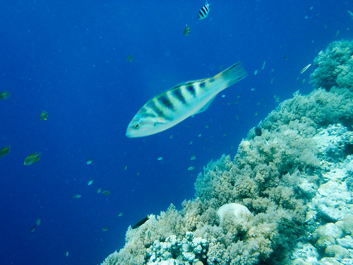 Snorkeling Big Drop Off in Palau