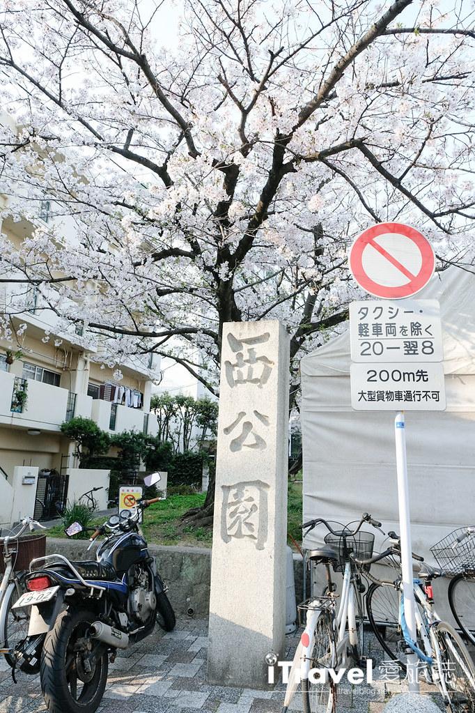 福岡賞櫻景點 西公園Nishi Park (2)