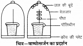 RBSE Solutions for Class 9 Science Chapter 8 Vital activities of living 28