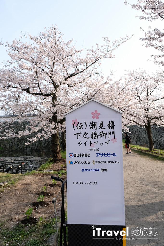 福岡賞櫻景點 福岡城 (6)