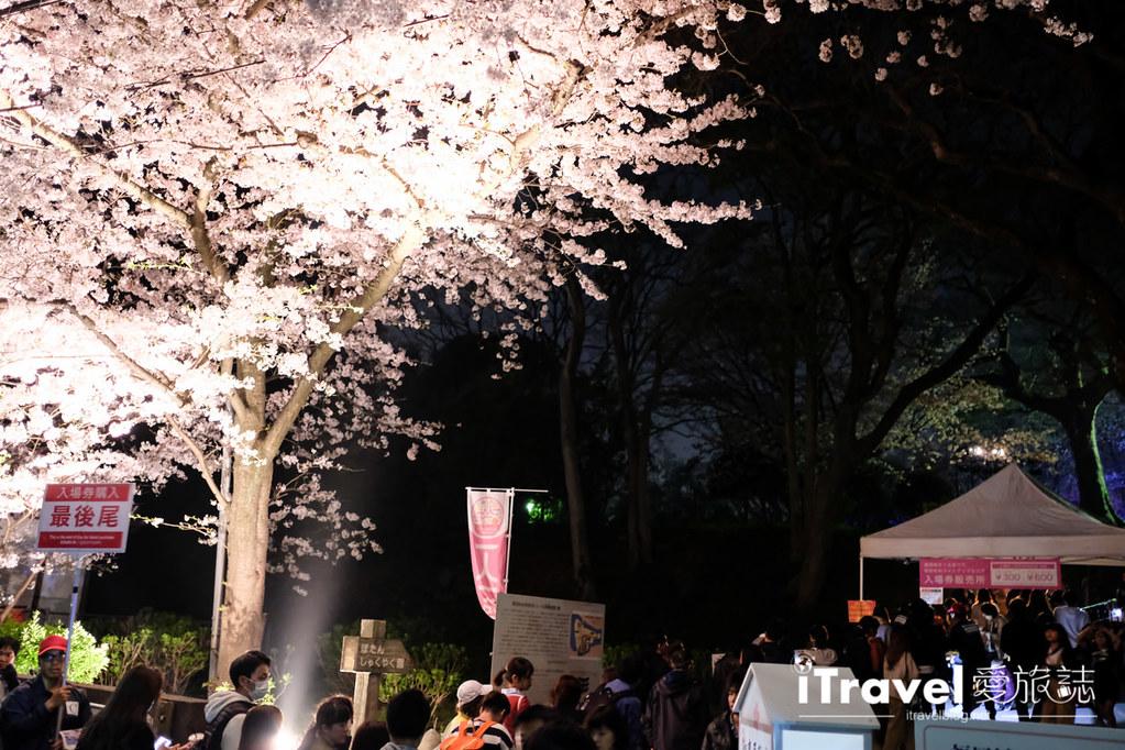賞櫻景點 福岡城夜櫻 (80)
