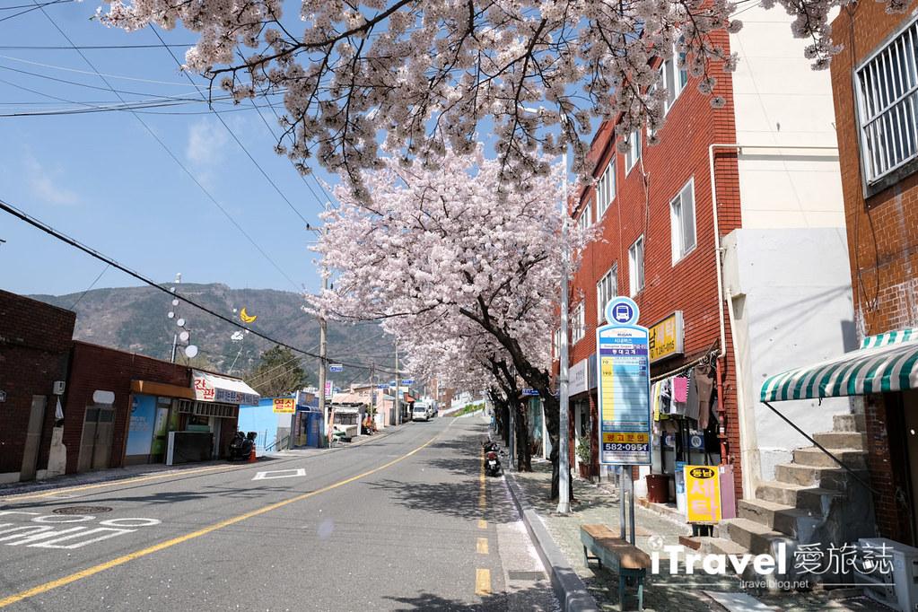 釜山賞櫻景點 東大新洞望洋路 (13)
