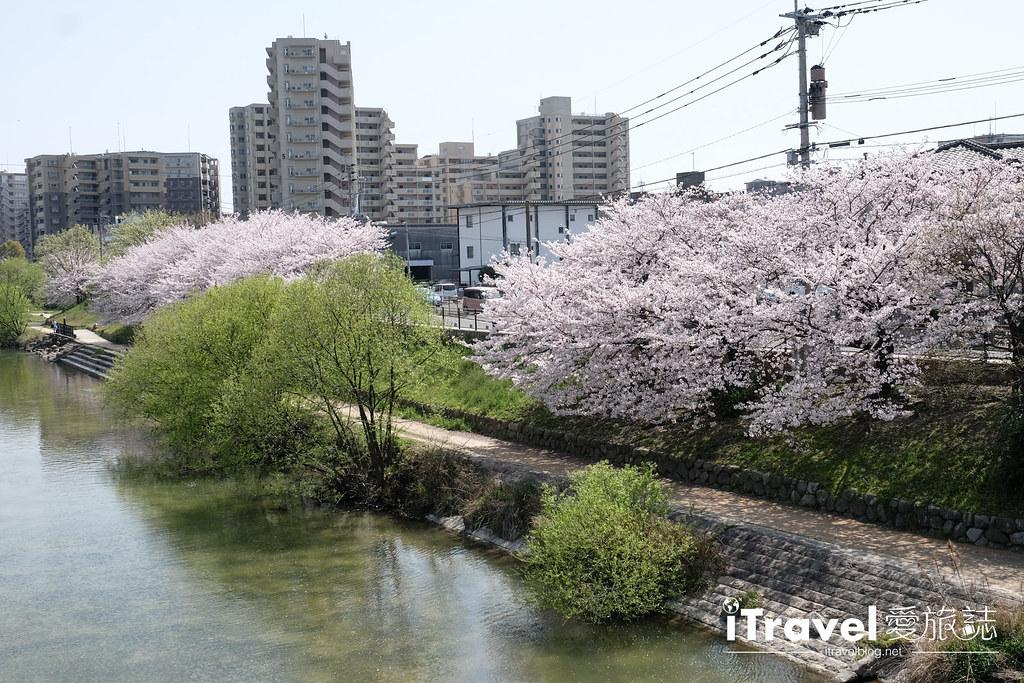 福岡賞櫻景點 美野島南公園 (16)