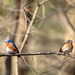 The Romantic Tensions Of Your Average Bluebird Couple