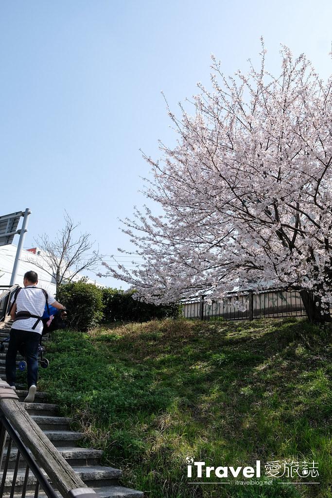 福岡賞櫻景點 美野島南公園 (60)