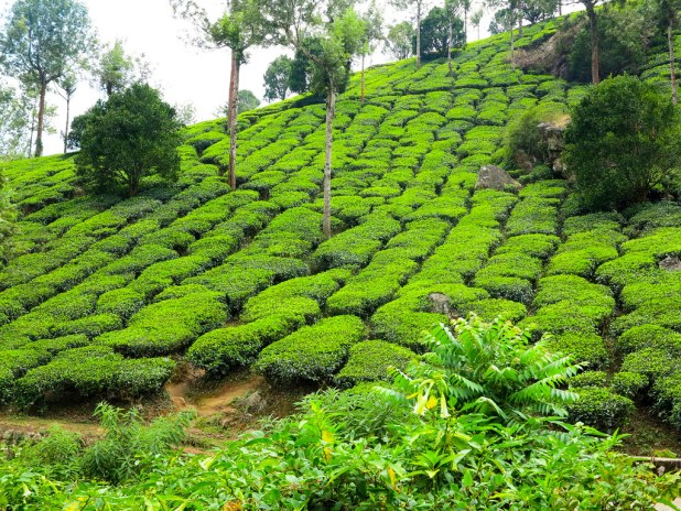 Lo mejor de Kerala