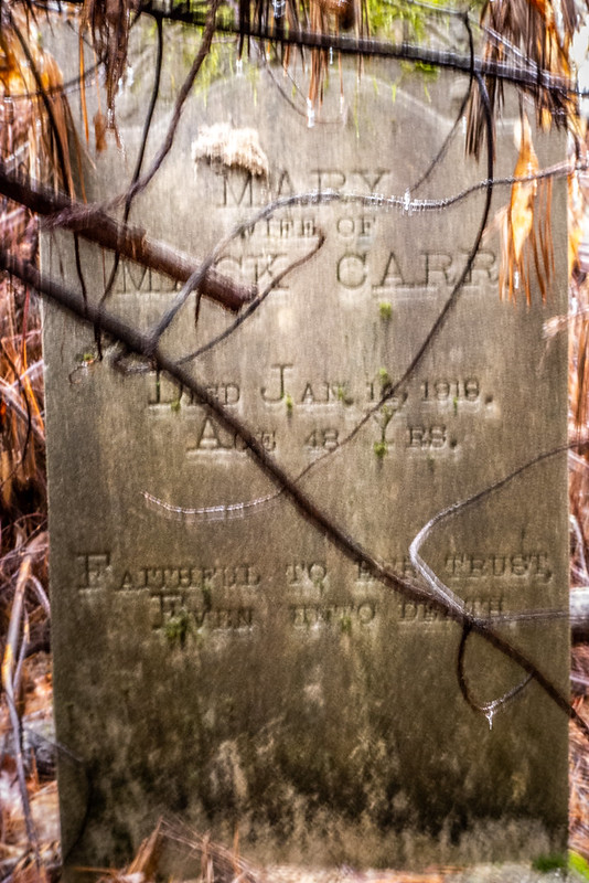 Tall Pines Preserve and South Saluda Church Cemetery-41