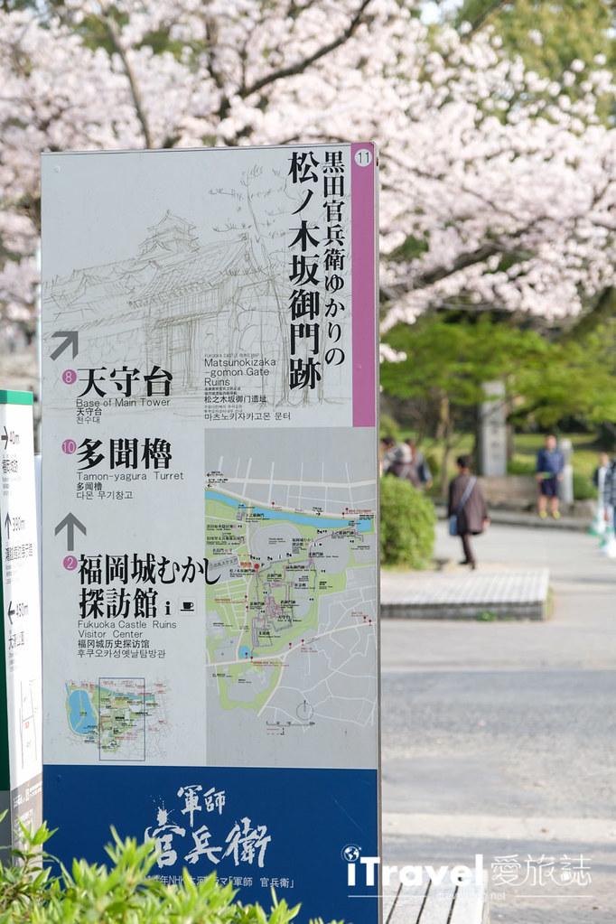 福岡賞櫻景點 福岡城 (19)