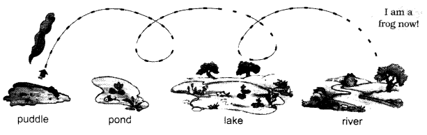 NCERT Solutions for Class 1 English Chapter 4 The Bubble, the Straw, and the Shoe 1