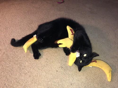 Bananacat