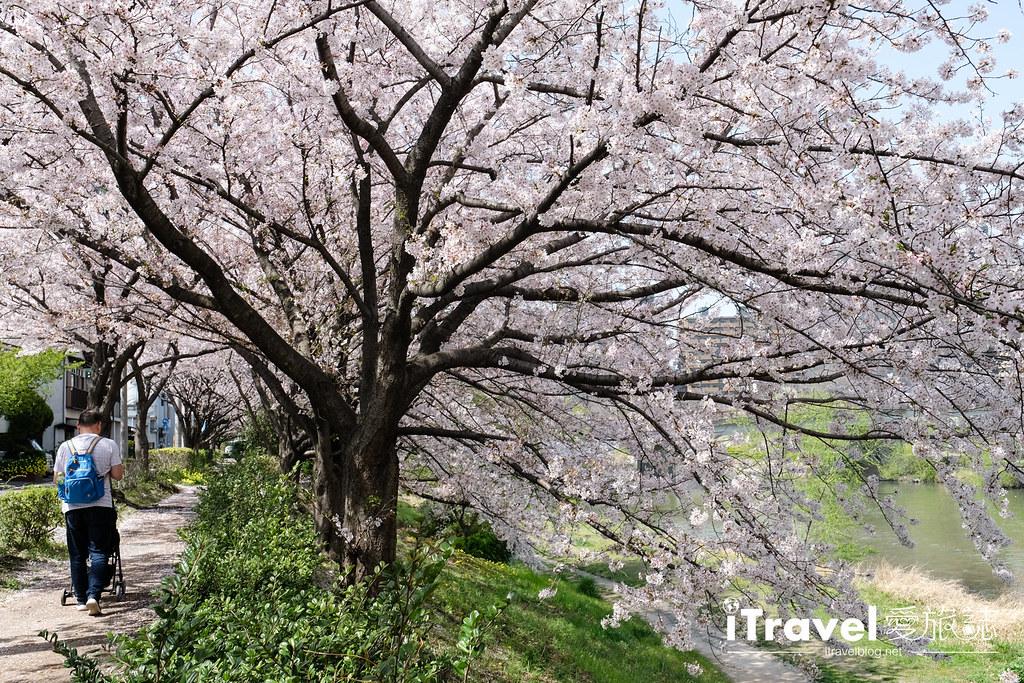 福岡賞櫻景點 美野島南公園 (22)