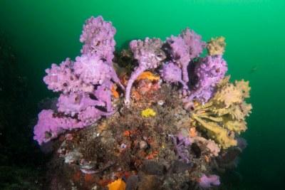 Ascidian rock palette #marineexplorer