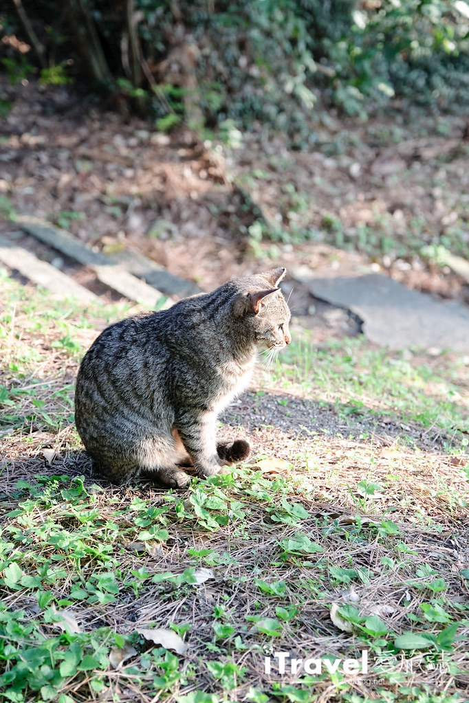 福岡賞櫻景點 西公園Nishi Park (47)
