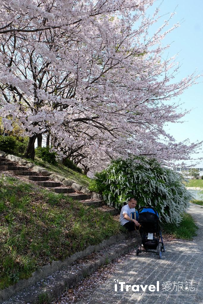 福岡賞櫻景點 美野島南公園 (37)